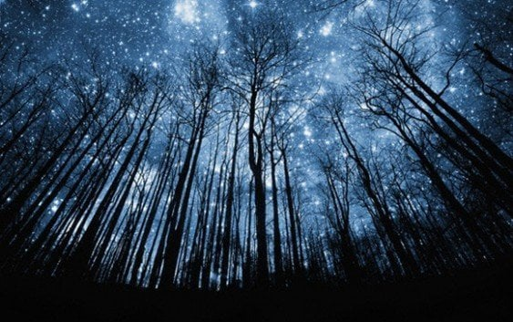 Un espectáculo; lluvia de estrellas esta noche