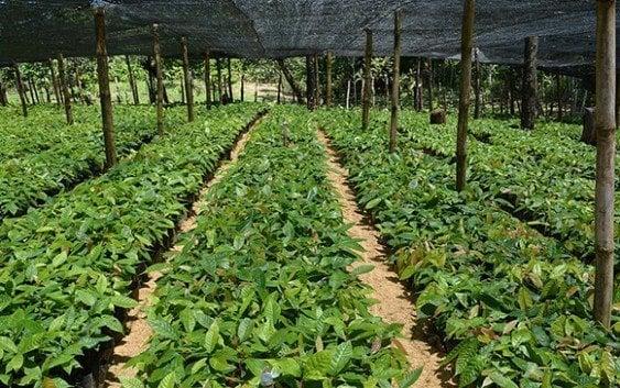 Productores de El Valle ampliarán cultivos con plantas híbridas