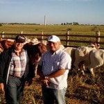 Adquiere toros reproducidos mediante fertilización in vitro