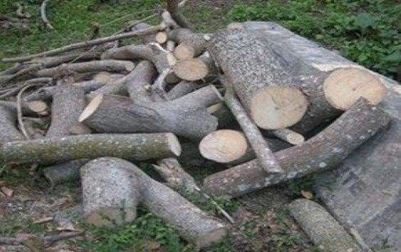 Denuncian corte masivo arboles Lomas de Villa Trina
