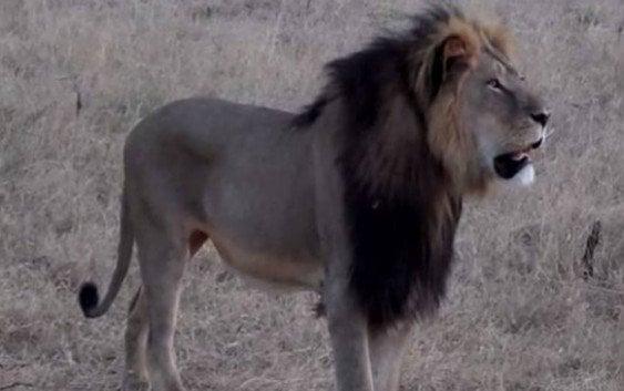 Identifican ASESINOS colega rey Juan Carlos que mató a Cecil