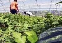 Agricultura paga más de 29 millones a productores