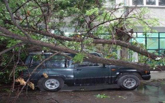 Sepultan victima de árbol derribado por Erika