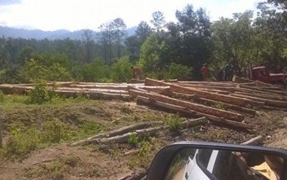 Continúa depredación y corte de árboles en Rio Limpio