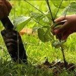 Empresa realiza jornada reforestación escuela El Tanque en Barahona