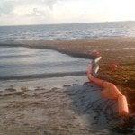 Gobierno llamará licitación para barreras contener algas playas