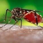 OMS advierte el virus del zika llegará a toda América