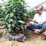 Abinader establecería ventanilla única financiamiento rápido producción a invernaderos