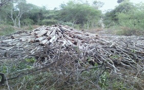 Denuncian Haitianos contratados deforestan finca a orillas del río Masacre