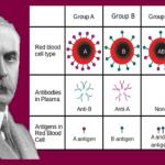 Karl Landsteiner: Nobel de Medicina, descubrió y tipificó los grupos sanguíneos