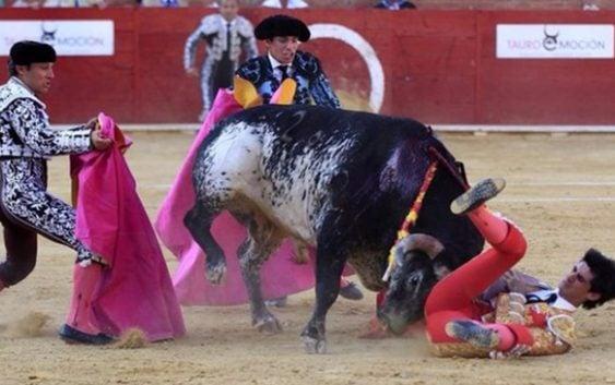 Asesinos: Pero estos malditos no solo asesinan al toro, sino a la familia