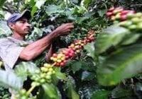 Cafetaleros de Polo denuncian abandono de las autoridades