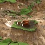 Rescatan vacas atrapadas tras terremoto en Nueva Zelanda; Vídeos