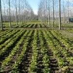 Danilo Medina declara 2017 Año del Desarrollo Agroforestal