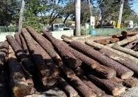 Wilson López desmiente tala de árboles; Llevaría a Medio Ambiente a la corte