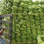 En oscuro plan Haití no esta solo; Impide entrada plátanos y otros; Vídeo