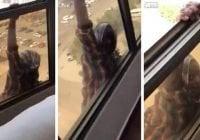 Crueldad: La apresan por grabar y no socorrerla cuando caía séptimo piso; Vídeo