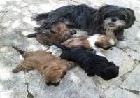 ¿El aguacate es malo para los perros?