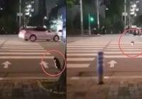 El gato envía un mensaje a los humanos; Espera el cambio del semáforo para cruzar