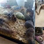 Mujer de Buffalo tenía 343 animales en su casa