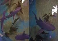 Conservación Ambiental halla siete tiburones en una residencia, más tres muertos