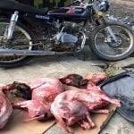Sorpresa: Haitianos delincuentes arrecian en Guayubín, República Dominicana