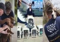 HSUS traslada de Puerto Rico a USA más de 3 mil mascotas tras huracán María