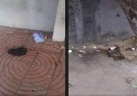 Ciudadanía indignada, Willy Melo muestra Parque Independencia con materia fecal; Vídeo