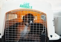 IATA garantiza seguridad y el bienestar de los animales en sus vuelos