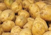 Productores de Constanza califican de «golpe bajo» importaciones de papas