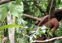 Tras 22 años tras de él hallan último sobreviviente de una tribu aislada en el Amazonas; Vídeo