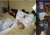Sujetos tenían 26 gatos muertos en la nevera de su casa y 18 vivos