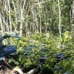 Rescatistas recuperaron cadáveres de cinco personas fallecidas en accidente de helicóptero