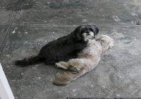 Asesinatos de perros por rabia es una práctica abusiva, cruel e infame