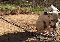 Multarán delincuentes que maltraten o dejen su mascota bajo el sol, frío, lluvia, sin agua y sin comida