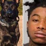 Condenado a 25 años de cárcel por asesinar perro policía