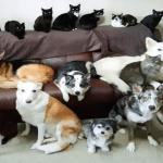 Kathy Smith se tomó dos semanas pero logró con sus 17 mascotas la «foto familiar» perfecta