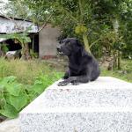La perra Mino convivió por un año con un niño que murió y no se aparta de su tumba; Vídeo