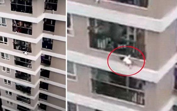 Califican de «Milagro» salvamento por un repartidor de una niña cayó de altura de 12 pisos en Vietnam