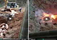 Horripilante masacre: Quemar cerdos vivos acción de malditos satánicos; Eso debe cobrarlo la justicia